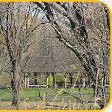 Picnic Shelters at Pine Hill Lakes Park